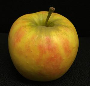 Apfel der Sorte Elstar