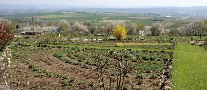 Blick auf ein Beet, im Hintergrund ist die Stadt Andernach zu sehen